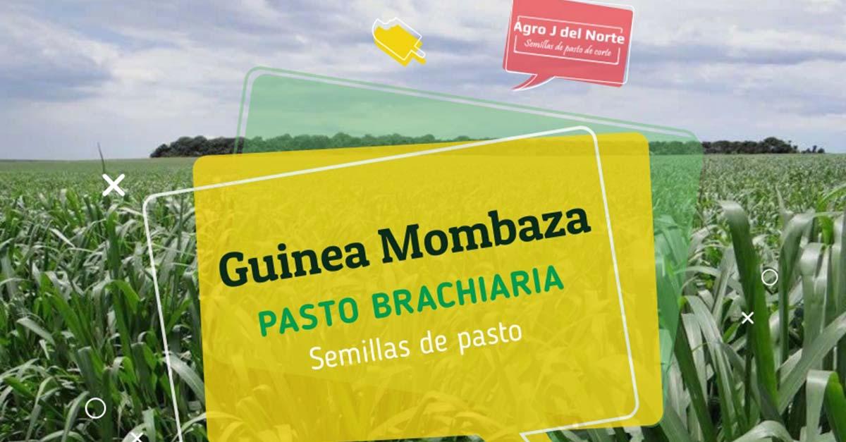 Guinea Mombaza
