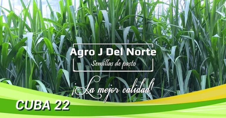 Semillas de pasto Cuba 22 Agro J del Norte